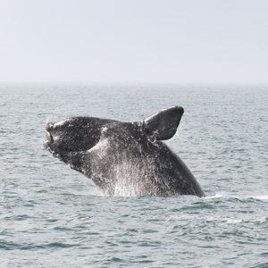 When Whales Meet Sails